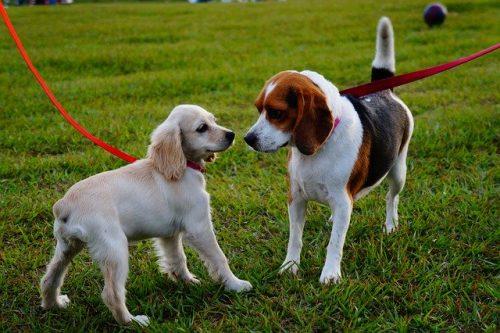 Sozialkurs für Hunde